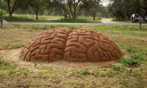 """""""מוח"""". טניה פרמינגר."""