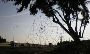"""Spider Web"", 2009. Sizel rope. 800x100 cm. The Green gallery, Israel."
