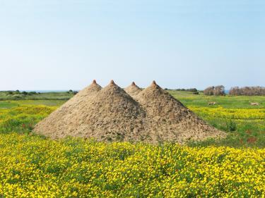 """טניה פרמינגר, """"פירמידה"""", 2009.  אדמה, 400x1200x1200 ס""""מ. ארסוף קדם, ישראל."""